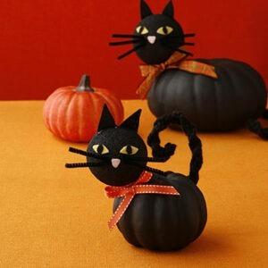 all-you-pumpkin-cats