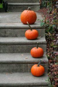pumpkin-1170272__340